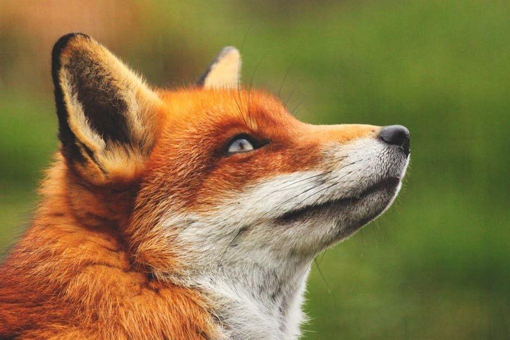 Fotos de animales mas raros 99